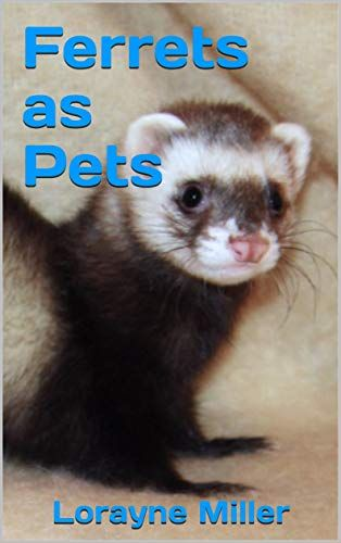 Ferrets As Pets Ga An Associate Of Mine In Seattle Had A Pet