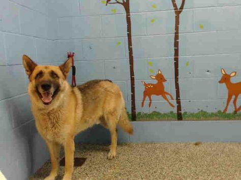 Www Petharbor Com Pet Sbct A484098 Pets Dogs Animals