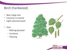 Image Result For Hardwood Tree Identification By Leaf Tree Identification Light Colored Wood Tree