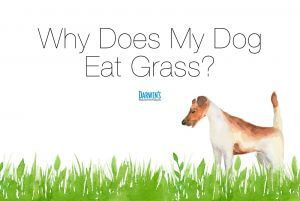 Pin On Why Does My Dog Eat Grass