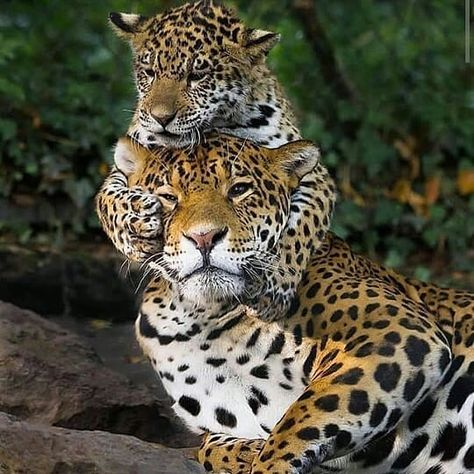 Baby animals, animals and pets, funny animals, cute animals, animals of the Big Cats, Cats And Kittens, Cute Cats, Funny Cats, Cute Baby Animals, Animals And Pets, Funny Animals, Animals Images, Wild Animals