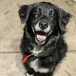 Pin By Jenny Ablan On Adopt Me In 2020 Border Collie Collie