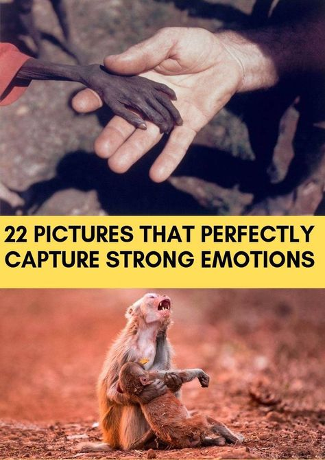 A human being has a broad range of emotions. It may seem impossible to categorize and count all of the different emotional states of a human, but studies show that there are more than 500 of them!