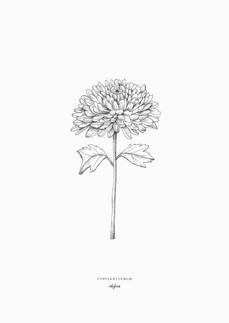 inkylines - Flowers - Chrysanthemum - Diet - Fashion - Woman's And 1000 Tattoos, Small Tattoos, Crysanthemum Tattoo, Chrysanthemum Drawing, November Birth Flower, Geometric Compass, Flower Line Drawings, Birth Flower Tattoos, Birth Flowers