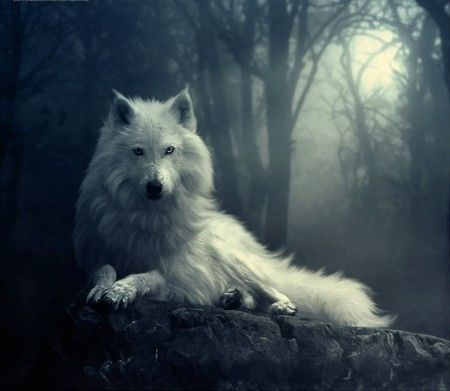 Game Of Thrones Dire Wolf Wallpaper Fi Is Coming Direwolf