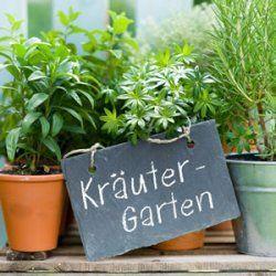 Krautergarten Anlegen Anleitung Fur Garten Und Balkon Krautergarten Anlegen Zimmerkrauter Pflanzen