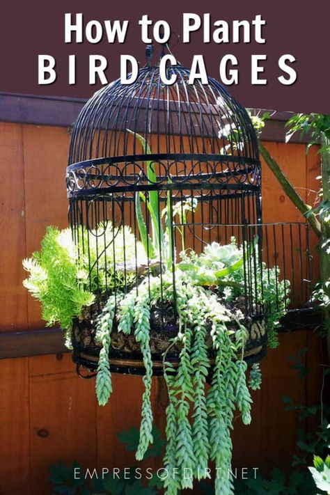 to Make a Birdcage Flower Planter Turn a decorative old bird cage into a wonderful planter for flowers or succulents.Turn a decorative old bird cage into a wonderful planter for flowers or succulents. Basket Planters, Flower Planters, Planter Ideas, Hanging Baskets, Container Flowers, Succulent Containers, Fall Planters, Container Plants, Garden Planters