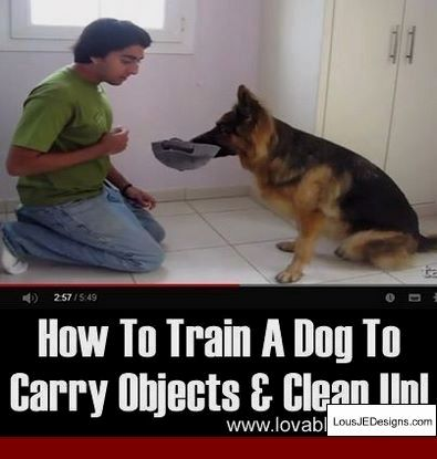 How Can I Train My Dog To Stay Outside And Pics Of Dog Training