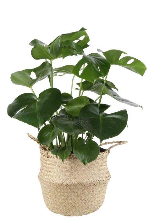 25 Best Indoor Plants For Apartments