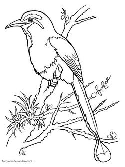 Coloring Page Motmot Bird Google Search Bird Coloring Pages
