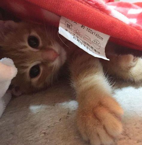 ❤️ お昼寝もいつも一緒😸✨✨ 夜寝てるときは少し物音がするだけで 私にひっついて怯えてます😳#風の音だよ んで布団に潜ってきて私の腕枕で爆睡💓 #びびりのヘタレ 毎日近くにもふもふがある幸せ😸❤️#添い寝 ◆ #こねこ部 #ねこ部 #ねこのきもち #保護猫 #里親 #茶トラ #猫 #子猫 #子猫保護しました #子猫部  #子猫動画 #愛猫 #うに #うにくん #うーくん #にゃんこ #にゃんこ部 #cat #親バカ #コロッケみたい #美味しそう #にゃんすたぐらむ #ねこすたぐらむ
