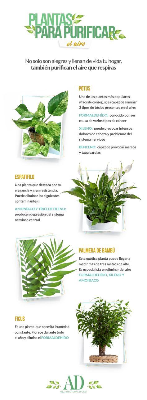 43 Ideas De Plantas Purificadoras En 2021 Plantas Plantas Jardin Jardinería En Macetas