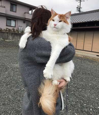 猫 大きい