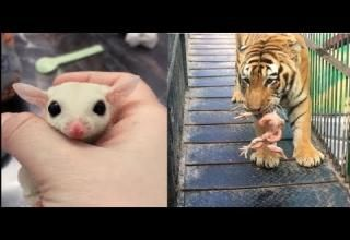 Cute Baby Animals Videos Compilation Cute and Funny Animals