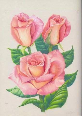 Resultado De Imagem Para Drawings Of Colored Roses Desenhos De Flores Laminas Para Decoupage Telas Pintadas