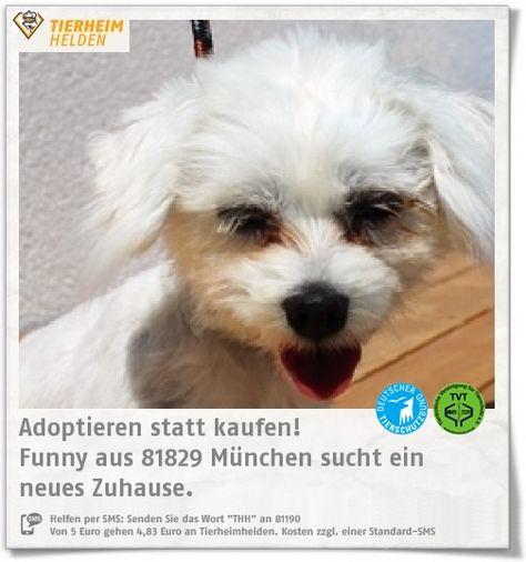 Funny Kam Als Fundtier Ins Tierheim Munchen Und Wurde Nicht Mehr