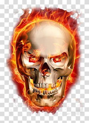 Burning Skeleton Transparent Background Png Clipart Transparent Background Skull Illustration Skeleton Illustration
