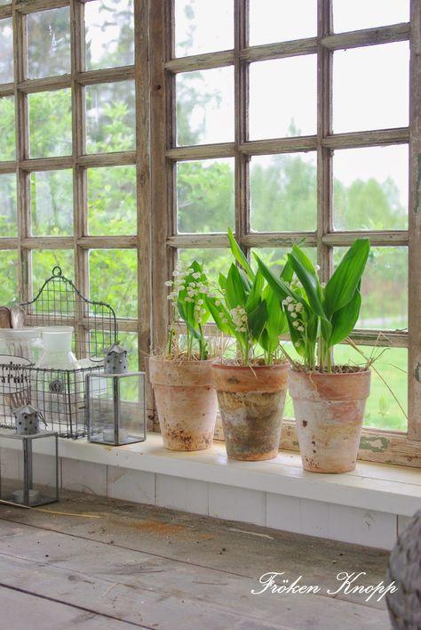 Kikar In Lily Of The Valley Indoor Garden Indoor Plants