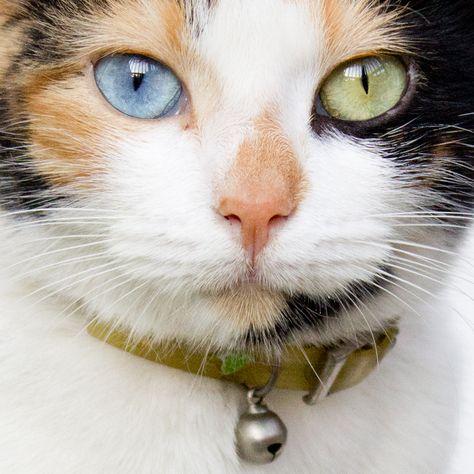 cat1179