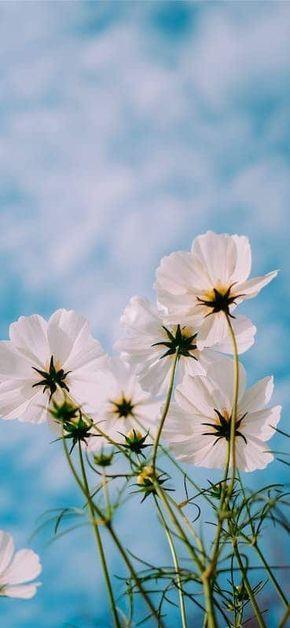 خلفيات ورد للايفون Spring Wallpaper Spring Pictures Flower Wallpaper