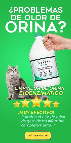 Cómo Eliminar El Olor De La Orina De Gato Xion Lab Cats Dumas
