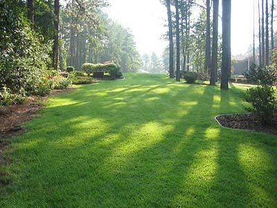 One Of The Best Grass To Grow In Florida Is Zenith Zoysia Grass Grass Lawn Ba Florida Grass Grow Lawn Zenit In 2020 Zoysia Grass Zoysia Grass Seed Grass Seed