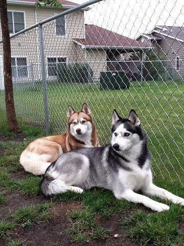 Had To Shar This Beautiful Dogs Missing The Owner Can T Eat Or