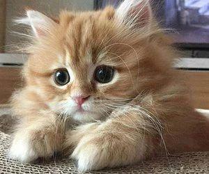 So Beautiful Kittens Cutest Orange Kittens Cute Cats