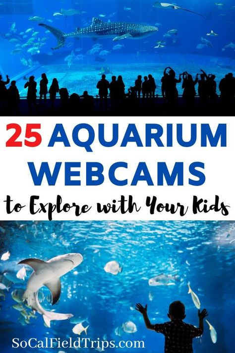 Take your kids on an adventure to visit one of these 25 aquariums around the world who offer live animal webcams! Learn about the ocean sea life and more. Learning Websites, Educational Websites, Fun Learning, Learning Activities, Toddler Learning, Toddler Activities, Virtual Field Trips, Home Schooling, Kids Education