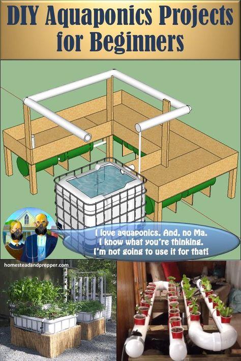 DIY Aquaponics Projects For Beginners