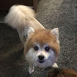 Salisbury Md Dachshund Meet Toby Meeko A Pet For Adoption