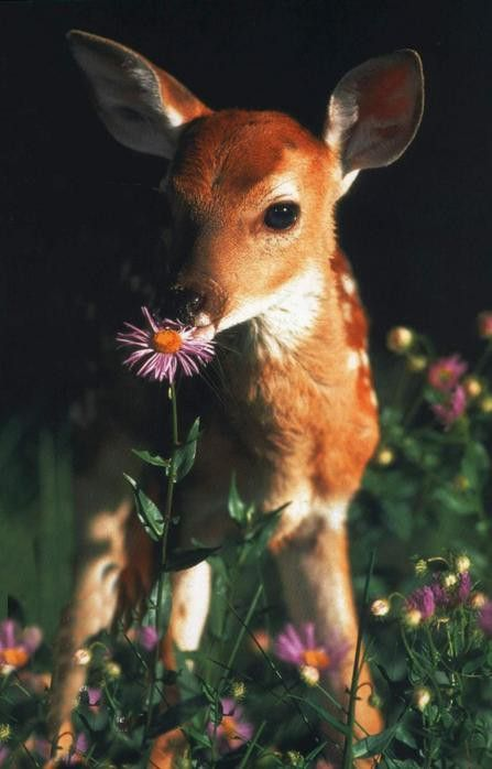 Sweet Bambi taking time to smell the posies...
