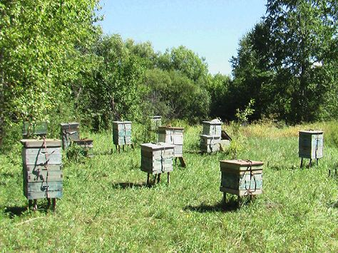 Learn to keep bees and harvest honey