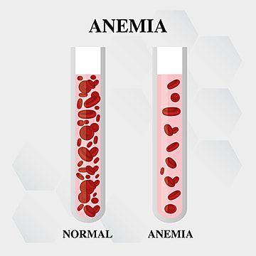 48+ Sel darah merah normal ideas