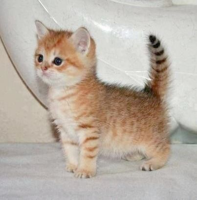 Cats And Kittens For Sale Rotherham Cat Kittens Ducklings Kittens Cutest Cute Cats Cats And Kittens