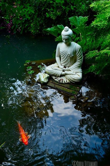 Buddhist Garden Design Decoration koi carp and siddharta | koi carp, carp and koi