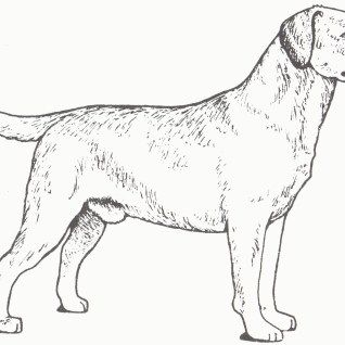 27 Amazing Picture Of Golden Retriever Coloring Page Dog