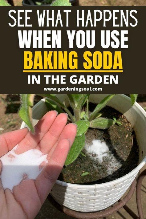 Garden Yard Ideas, Diy Garden Projects, Lawn And Garden, Garden Bed, Garden Landscaping, Growing Plants, Growing Vegetables, Gemüseanbau In Kübeln, Baking Soda Uses