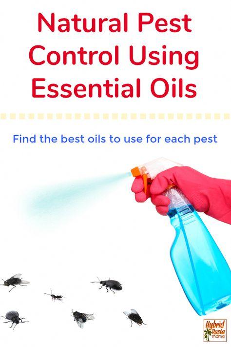 All Natural Pest Control Using Essential Oils