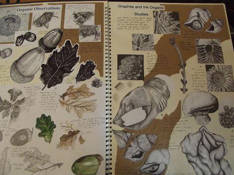Art Sketchbook - observational drawings of organic forms // Art student portfolio