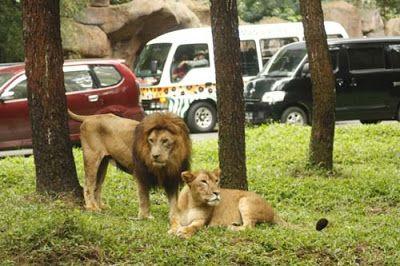 Kebun Binatang Prigen Jawa Timur