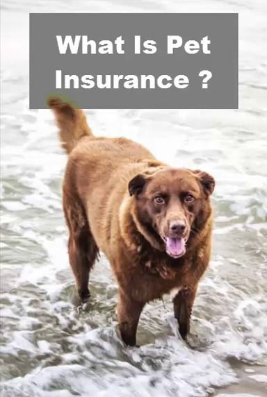 What Is Pet Insurance And How Choose The Best Pet Insurance In