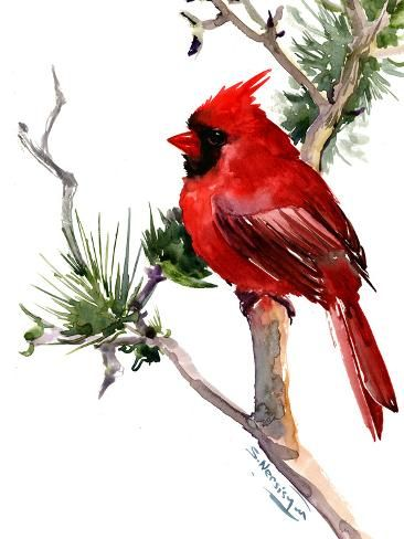 Cardinal Bird Giclee Print By Suren Nersisyan In 2020 Watercolor
