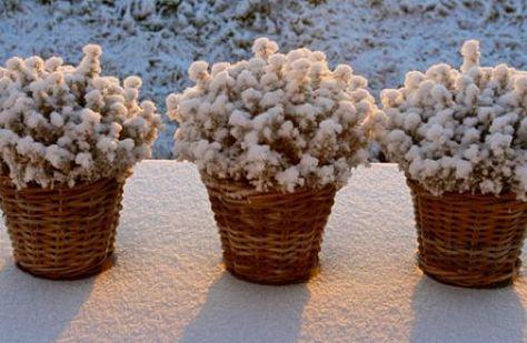 Piante invernali da balcone: 10 idee da copiare