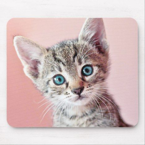 Cute Kitten With Blue Eyes Mouse Pad Zazzle Com Kittens Cutest Kittens Cats