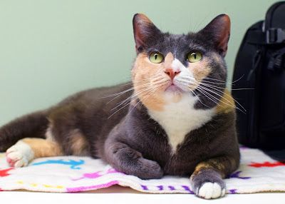 Lovely Lola Is Looking For A Forever Home Animal Shelter