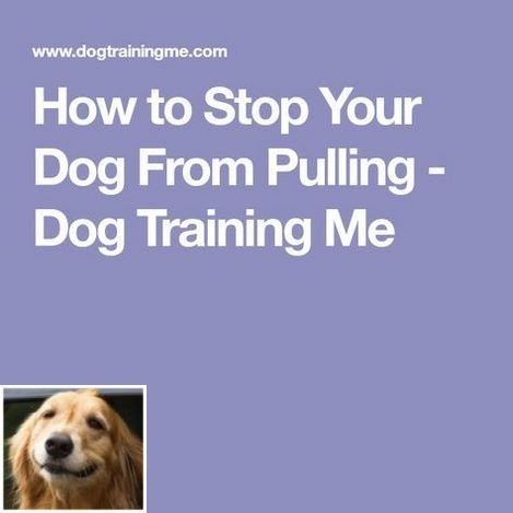 Stop Dog Jumping And Dog Clicker Training Check The Image For