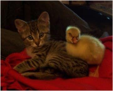48 Kittens Giving You Kitty Cat Eyes Kittens Cutest Cute Little
