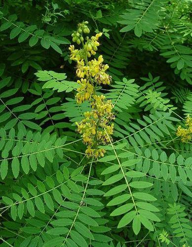 41 Ideas De Plantas Medicinales