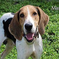 Fort Myers Florida Treeing Walker Coonhound Meet Derrick Mason